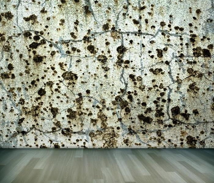 Commercial How To Avoid Mold Buildup